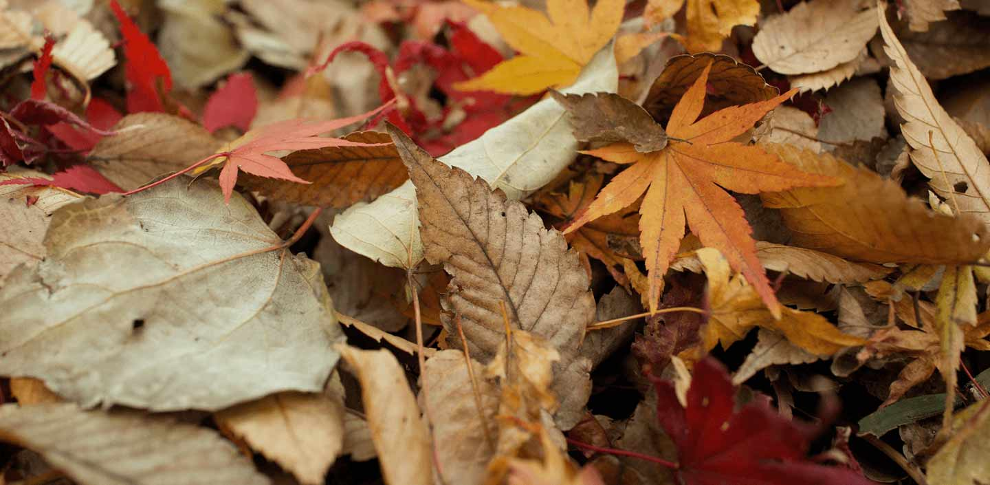 Tips on an Autumn WOF for Your Home