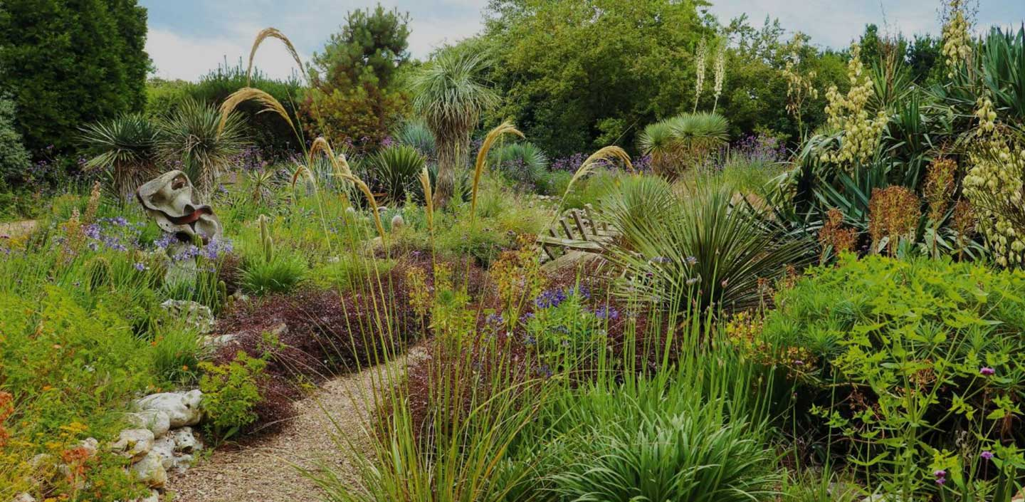 Dry Tolerant Planting Ideas for New Zealand Gardens